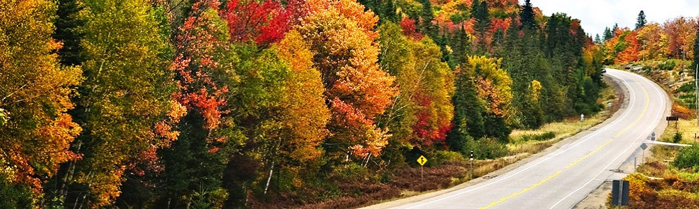 road in between colourful trees in the fall