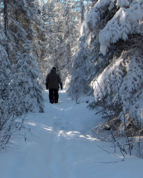 Person walking along a snowy forest